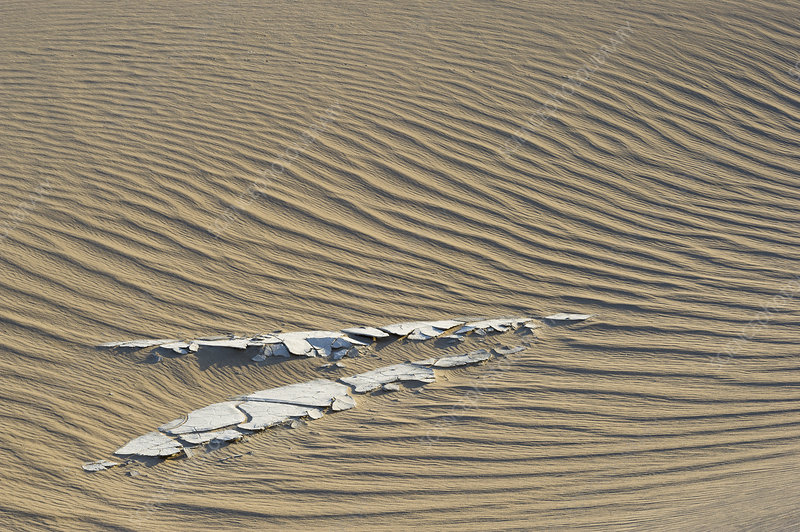 Rippled Sand Dune, Death Valley, CA
