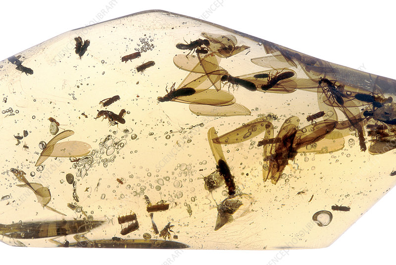 Termites and other insects in Amber