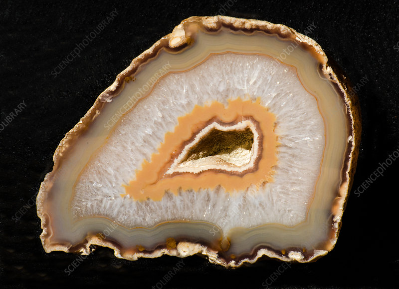 Agatized Fossil Coral
