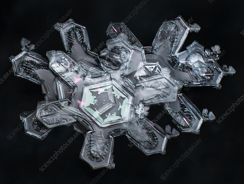 Cluster of Snowflakes