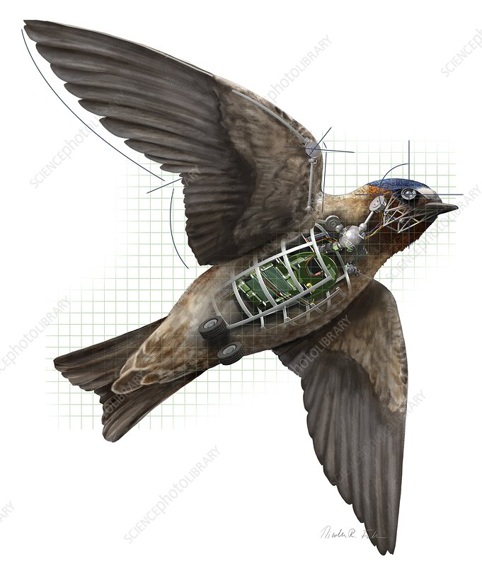 Swallow drone robotics, illustration