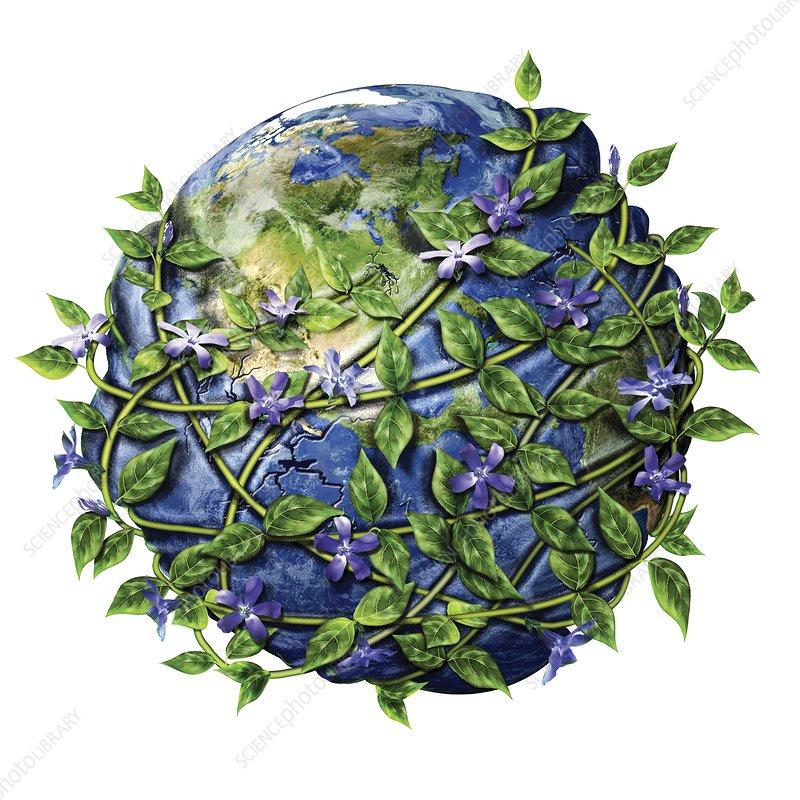 Invasive plants, conceptual illustration