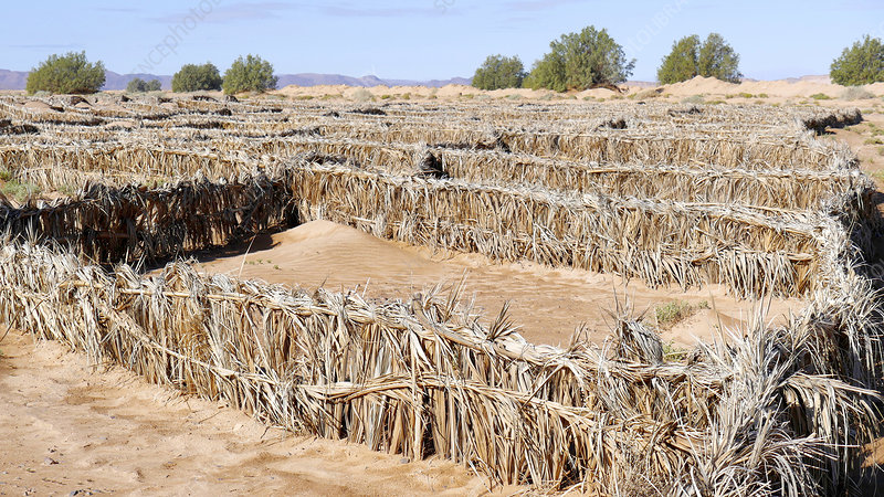 Desertification prevention, Morocco