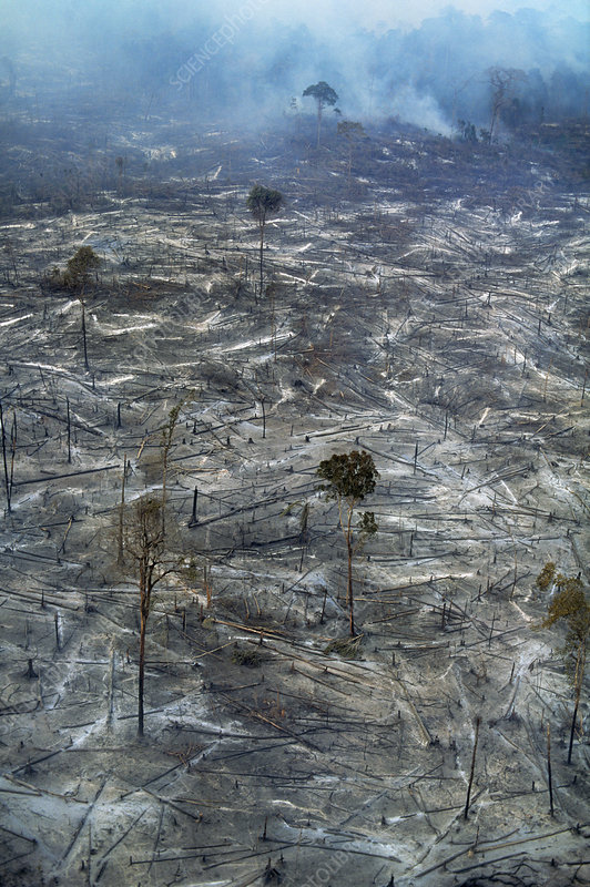 Destroyed Rainforest