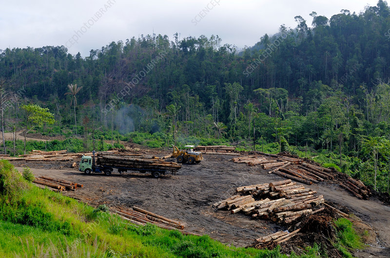 Logging of Lowland Rainforest