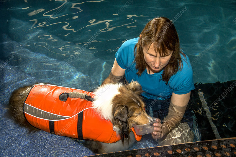 Veterinary Tech Exercises Dog in Pool
