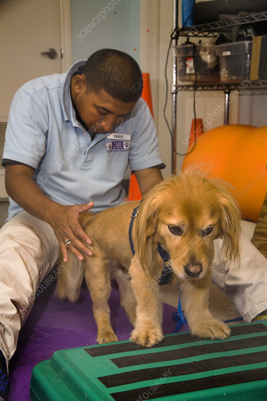 Dog in Therapy at Animal Hospital