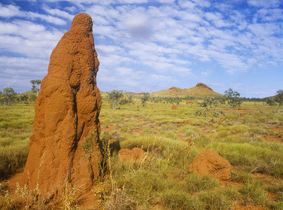Termite Mounds in Outback Australia