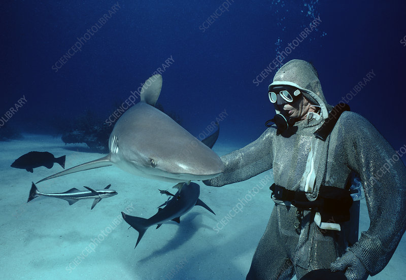 Sharks and shark handler