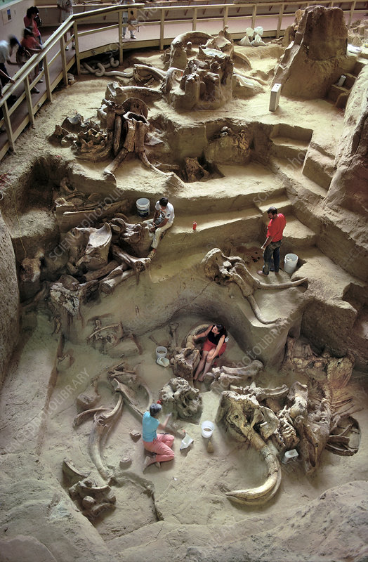Paleontologists Excavating Mammoth Bones