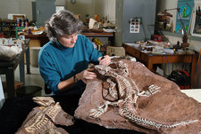 Palaeontologist with Fossil