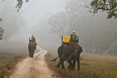 Forest Rangers in India