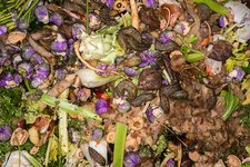 Worms and slugs in a compost bin