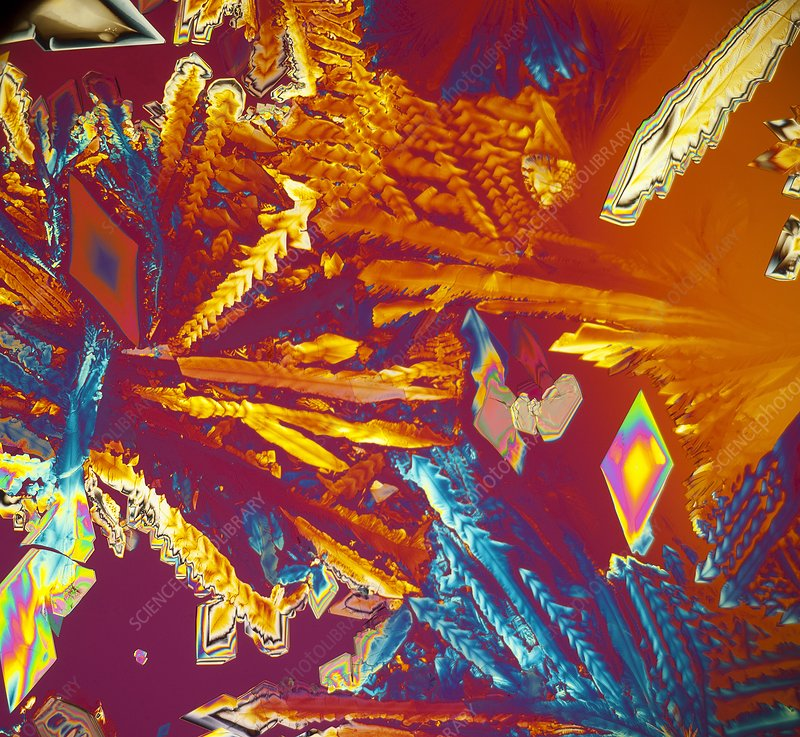 Aspartic acid crystals, light micrograph