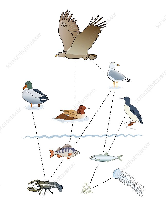 Food chain, illustration
