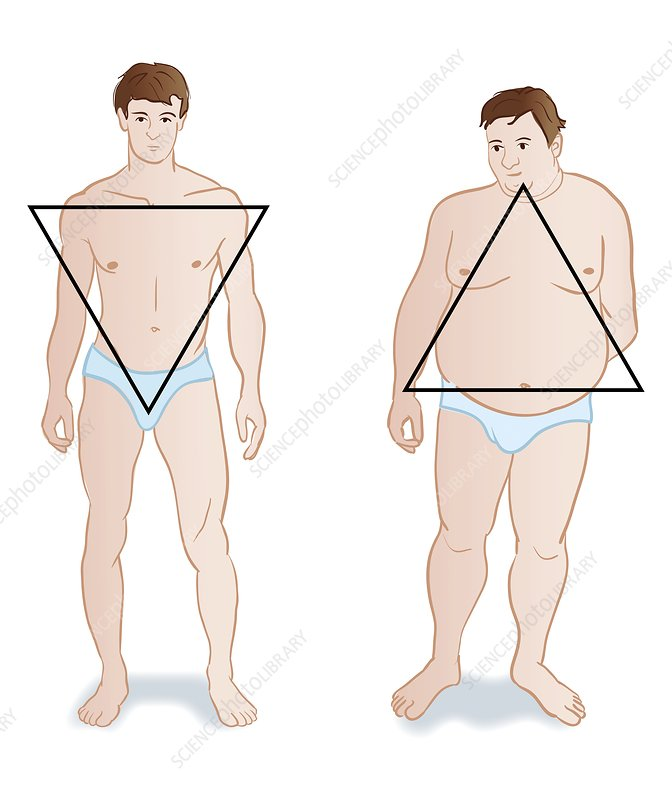 Male body shapes, illustration