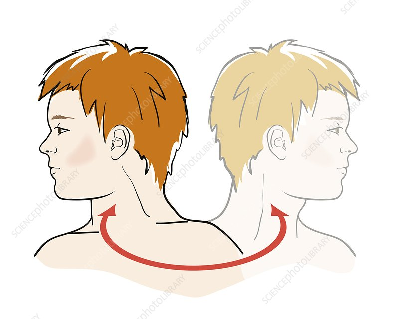 Stretching neck, illustration
