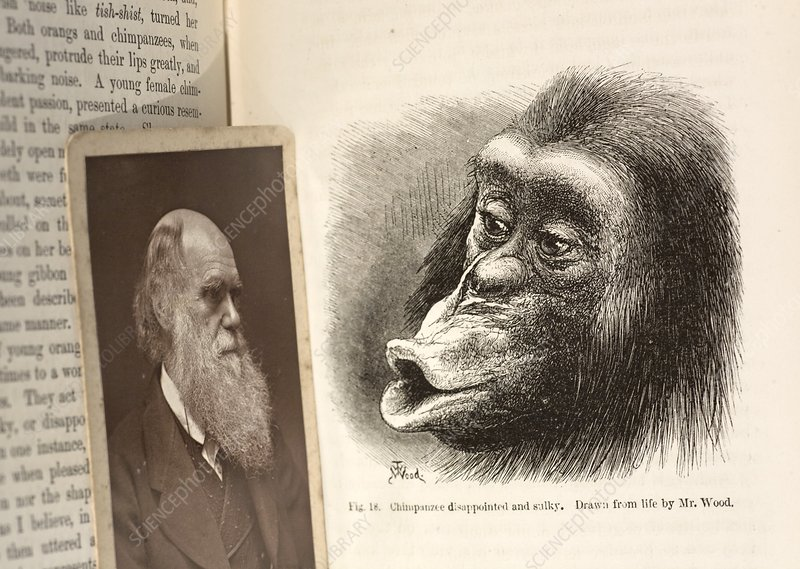 Darwin on chimpanzee emotions, 1874