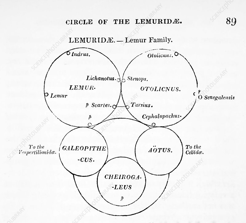 Swainson's quinary taxonomy, 1835