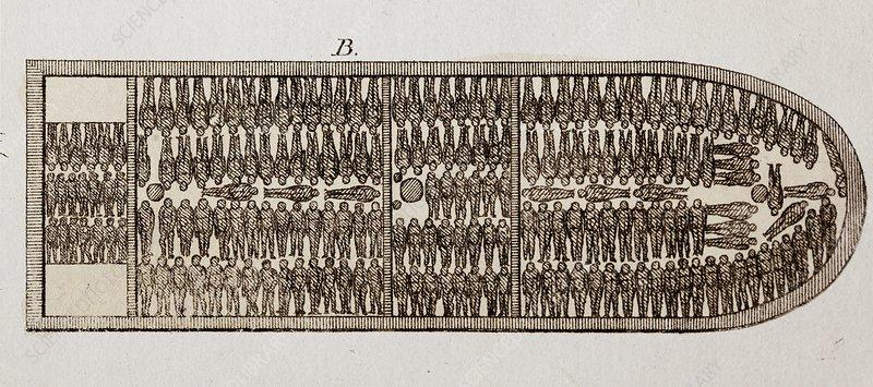 Slave Ship Diagram  19th Century  9551
