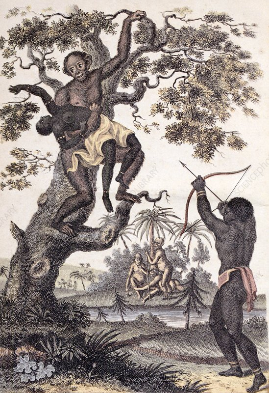 1795 Ape abducts woman Sibly Chimp orang
