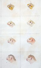 Frog to human evolution, 1777