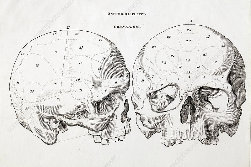 1823 Craniology Craniometry region skull