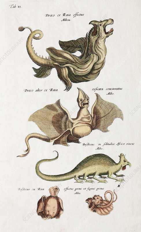 Dragons, 17th century