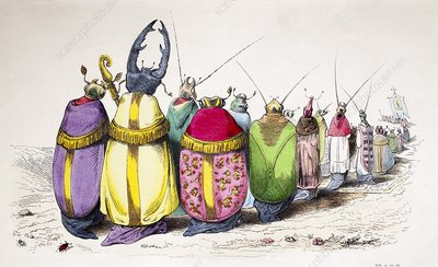 1842 Caricature coloured church beetles
