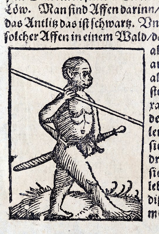 1560 Wild Man homo monkey warrior