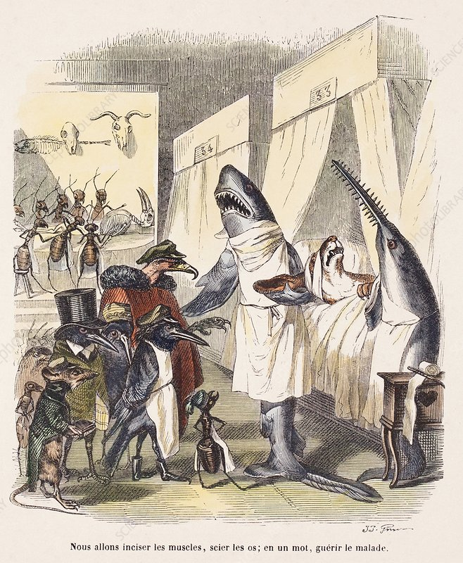 1842 Surgeon Doctors as sharks
