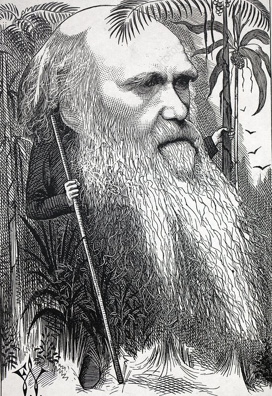 Caricature of Charles Darwin, 1873