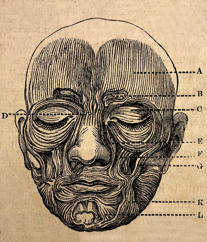 1872 Darwin Facial muscles for expression