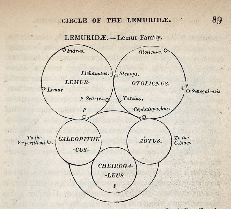 1840 William Swainson quinary taxonomy