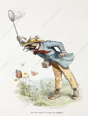 1845 Victorian butterfly collector