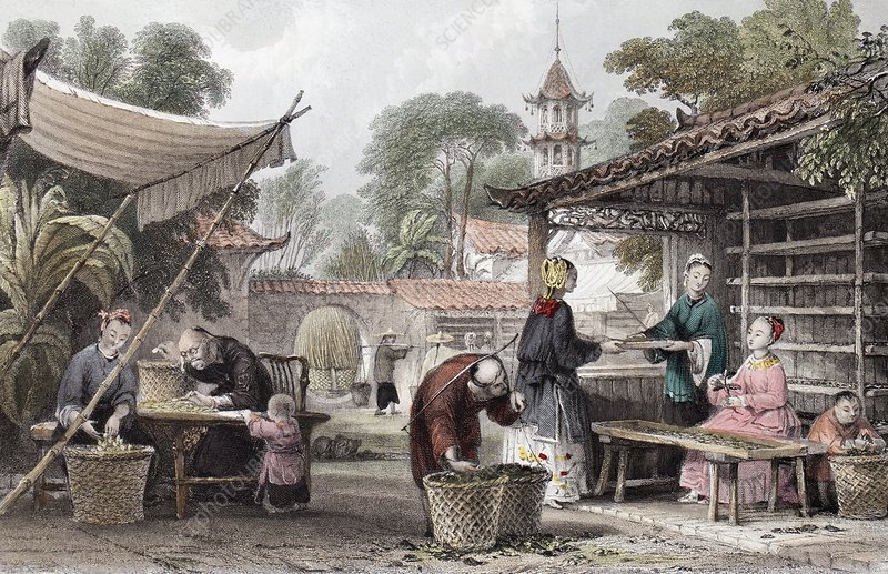 1843 Chinese silk silkworm manufacture