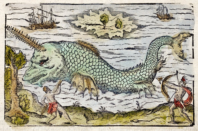 1582 Sawfish Pristis as sea unicorn