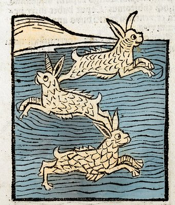 1491 Sea Hares from Hortus Sanitatis