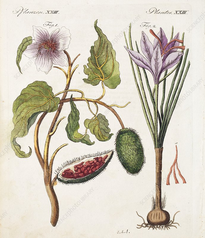 1795 Achiote Saffron natural food colour