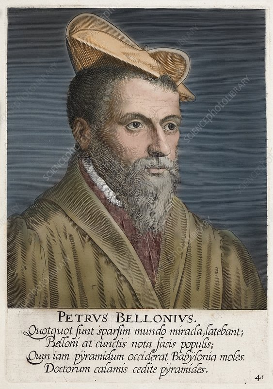 1650's Portrait Pierre Belon Naturalist