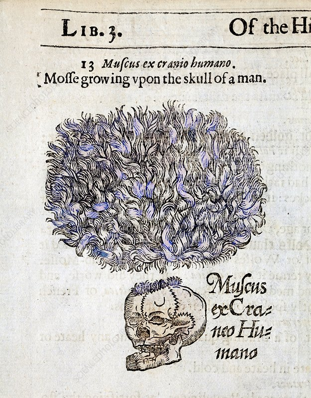 1597 Gerard's Herbal Moss on Human Skulls