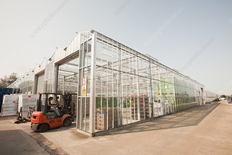 Greenhouses on the Lancashire mosslands