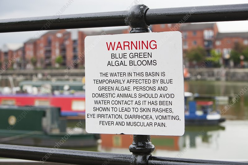A warning sign about blue green algae