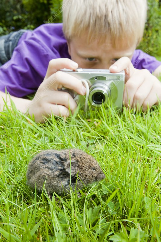 A young boy photographs a field vole