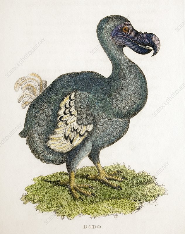 1809 The Dodo illustration in George Shaw