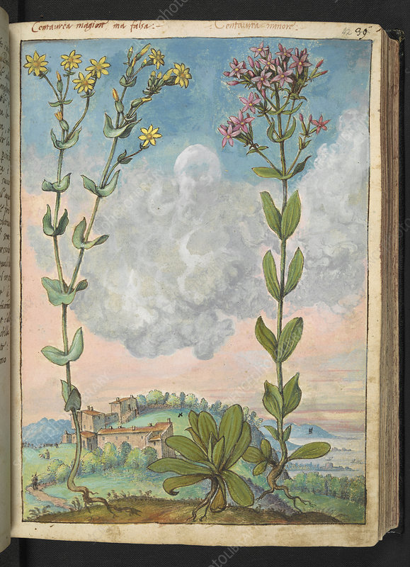Medicinal plants, illustration