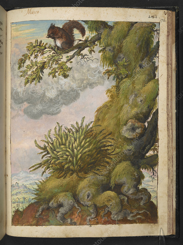 Moss, tree and squirrel, illustration