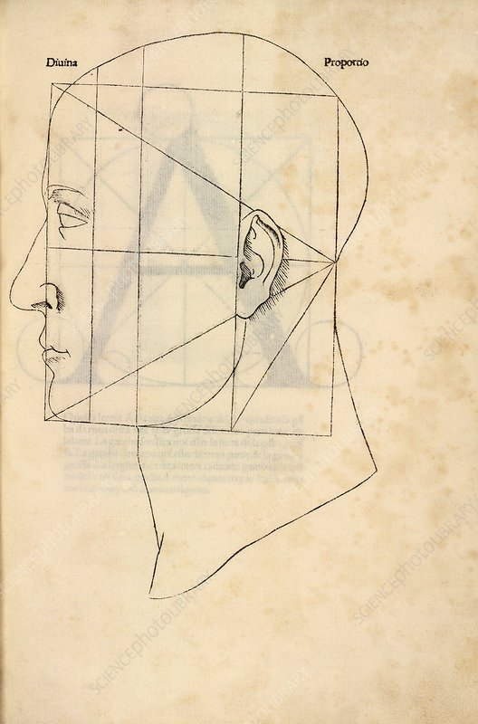 Proportions Of The Human Face 1509 Stock Image C0291035
