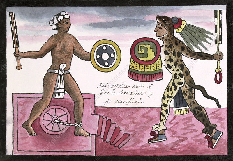 Aztec sacrificial fight, 16th century