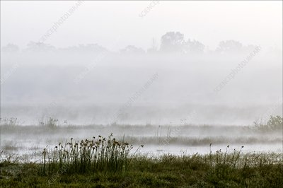 Wetlands in mist, India